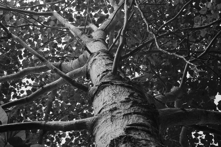 Low angle view of a tree