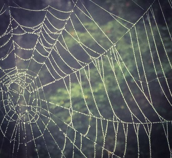 Spider web with morning dew. First Eyeem Photo