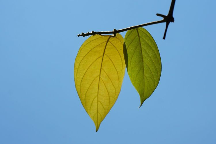 Even leaves