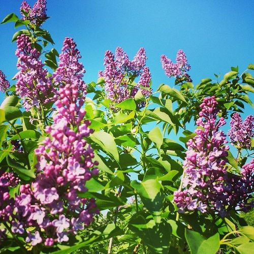 Lovely blue backdrop. .. Spring Sun Newbeginning Goodmorning treesandstuff flowers