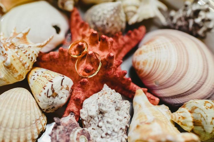 Full frame shot of seashells