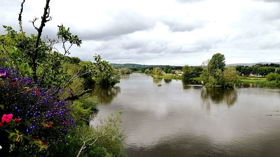 The River Shannon Cloud - Sky Tree Outdoors Nature Lake Landscape Water Beauty In Nature Day No People Scenics Sky EyEmNewHere HuaweiP9 Photograph River Shannon