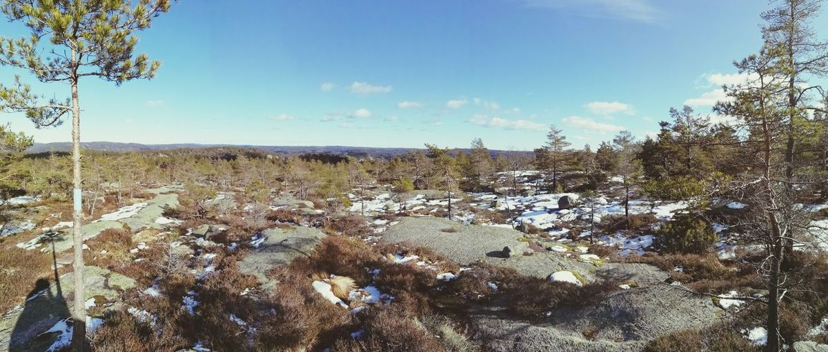 Panoramic view of trees and rocks against sky