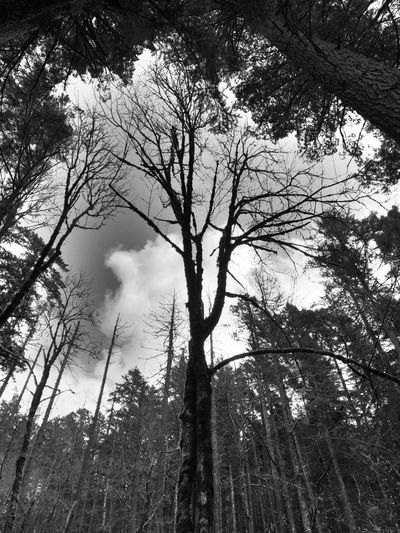 Tree Nature Bare Tree Beauty In Nature Black And White Branch Sky Tree Trunk Outdoors Scenics Tranquil Scene Low Angle View
