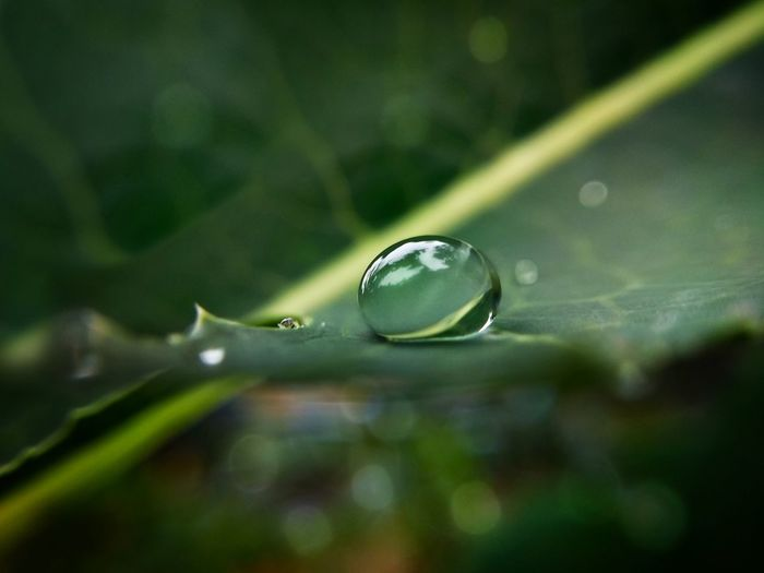капля капляводы последождя макро макромир Природа Drop Waterdrop Aftertherain Macro Macroworld Nature Water