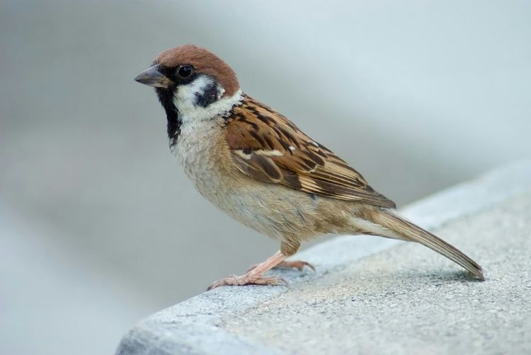 Taking Photos Bird Photography In The Balcony