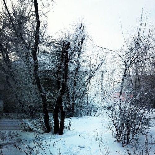 Irkutsk Winter Frosen Morning Snow Trees Schnee Arschkalt Minus Temperatur Thirty Degree Pitman Street Иркутск Мороз -30 Снег Улица Морозное Утро