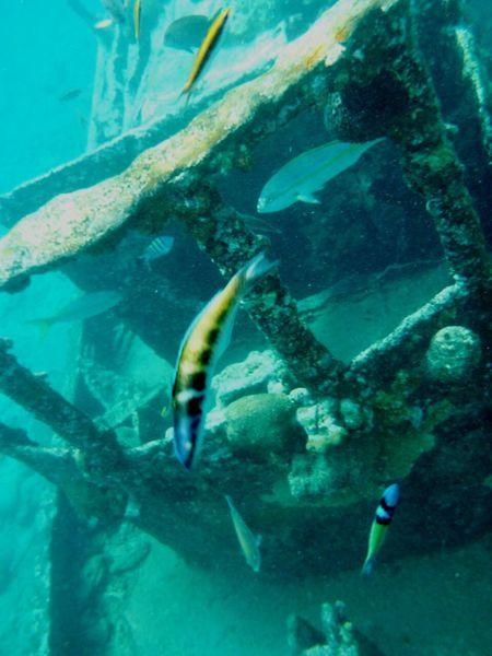 Lost Ship Fish Underwater Underwaterphotography Snorkeling Sea