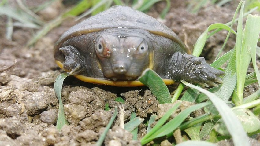 Animals In The Wild One Animal Animal Wildlife Animal Themes No People Nature Outdoors Day Close-up Baby Tortoise