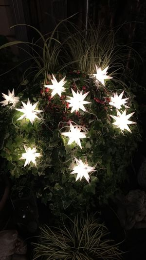 High angle view of illuminated flower