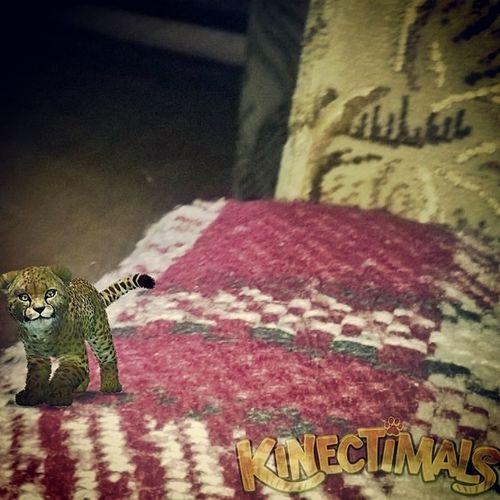 Moje kochane zwierzątko <3 Kinectanimals Widowsphone Animals