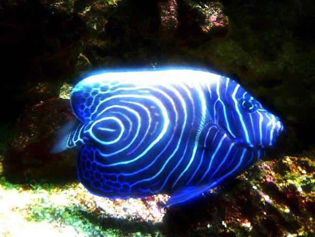fish beautiful coral