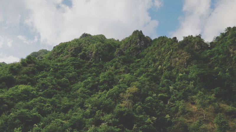 It's good going into wild woods. Woods Green Color Cloudy Sky Tree Tea Crop Forest Tree Area Social Issues Environmental Conservation Sky Cloud - Sky Plant Green Color Pinaceae Evergreen Tree Coniferous Tree Pine Cone Treetop