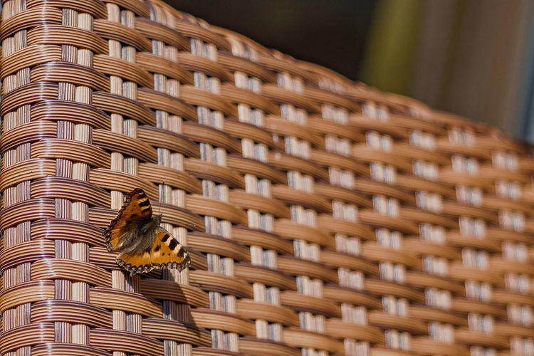 Close-up of a basket of a building with butterfly