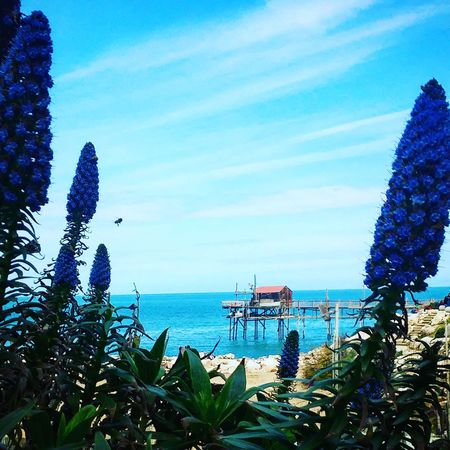 Sea Sky Blue Nature Plant Growth Water Tree No People Beauty In Nature Flower Cloud - Sky Outdoors Day Beach Termoli  Trabucco Millennial Pink EyeEmNewHere