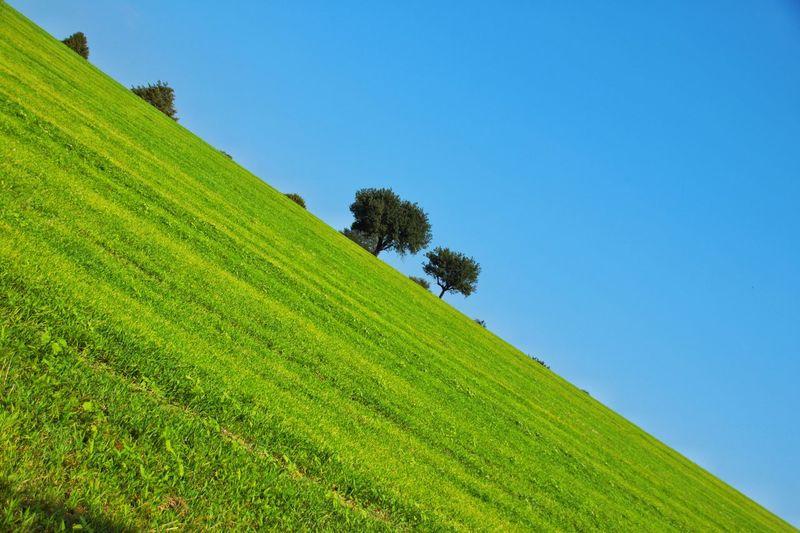 Split green I
