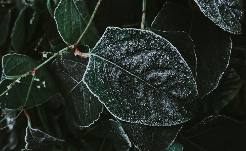 Close-up of wet leaves on plant during rainy season