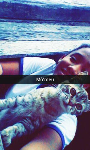 Life Is Cat