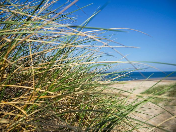 Grass on the beach Klitmøller Holiday Holiday In Denmark Denmark Beach Shore Beachphotography Plant Growth Nature Beauty In Nature Sky Blue Land No People Day Grass Green Color Sunlight Environment Outdoors Water Scenics - Nature Tranquility Field Landscape Tranquil Scene