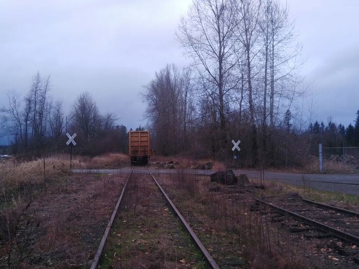 Tree Railroad Track Rail Transportation No People Nature Outdoors Day Transportation Cold Temperature