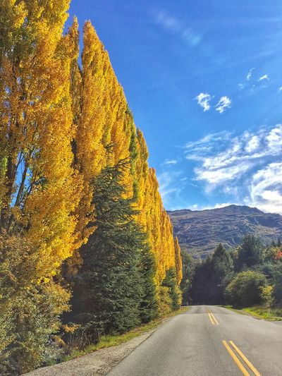 Beautiful Queenstown Cloudy Skies Road Yellow Autumn Autumn Colors Autumn Leaves Fall Beauty Fall Colors Fall Fall Leaves Poplars Poplar Tree New Zealand