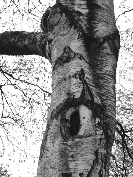 Tree Trunk Day Tree No People Textured  Outdoors Nature