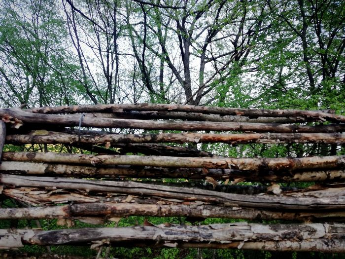 Vilage Bulgaria Balkan Bulgarian Nature Balkans Europe Hills And Trees Forest View Wood - Material Wooden Wooden Texture Wood Art Tree Tree Trunk Forest Branch Wood - Material Sky Close-up Log Timber Knotted Wood Hardwood Wood Grain Wood Paneling Woodpile Firewood Fallen Tree Deforestation Pile Oak Tree