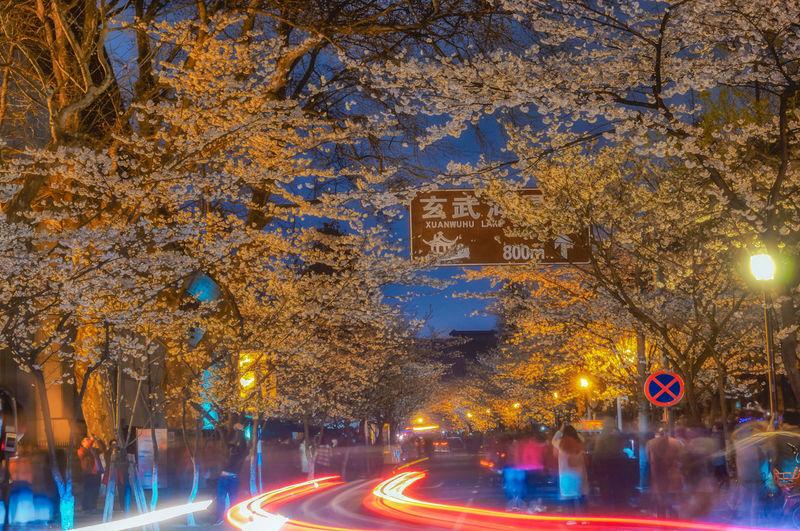 夜樱 Building Exterior City Long Exposure Night Road Tree 南京 夜景 旅游 樱花 鸡鸣寺