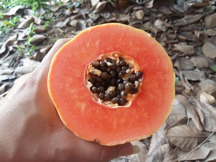 Half cut and whole papaya fruits Close-up Eating Healthy Food Freshness Fruit Fruits Fruits And Vegetables Healthy Eating Healthy Food Papaya PawPaw