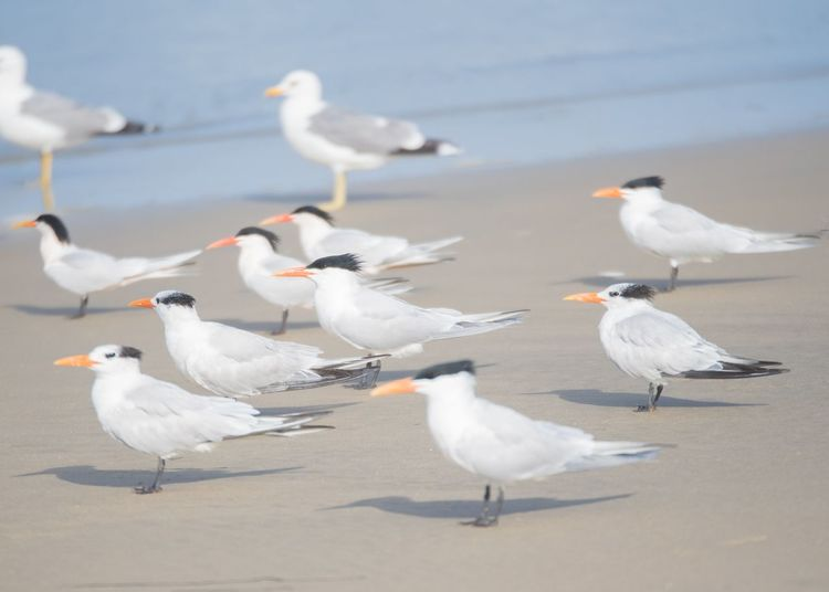 ©Amy Boyle Photography Gulls Beach Gull Ocean California Dreamin