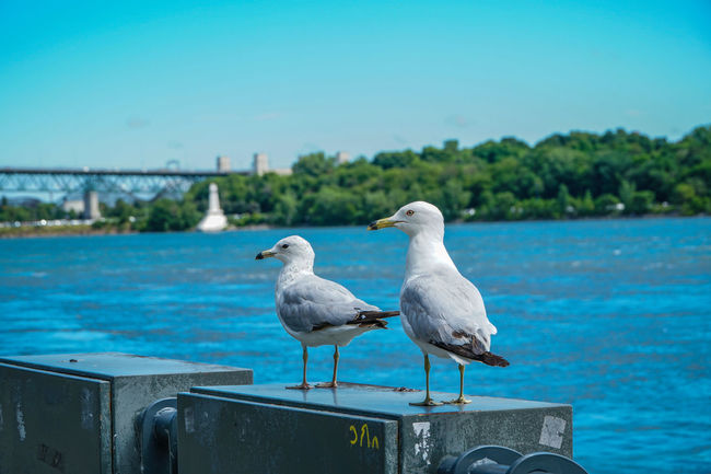 Old Port Of Montreal/Vieux-Port De Montréal Seagulls Tourist Attraction  Travel Photography Traveling Day Nature Outdoors Seagull Tourism Tourist Destination Travel Destinations Water
