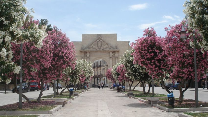 City Wall Lecce - Italia Pink Flower Porta Puglia Trees Pastel Power