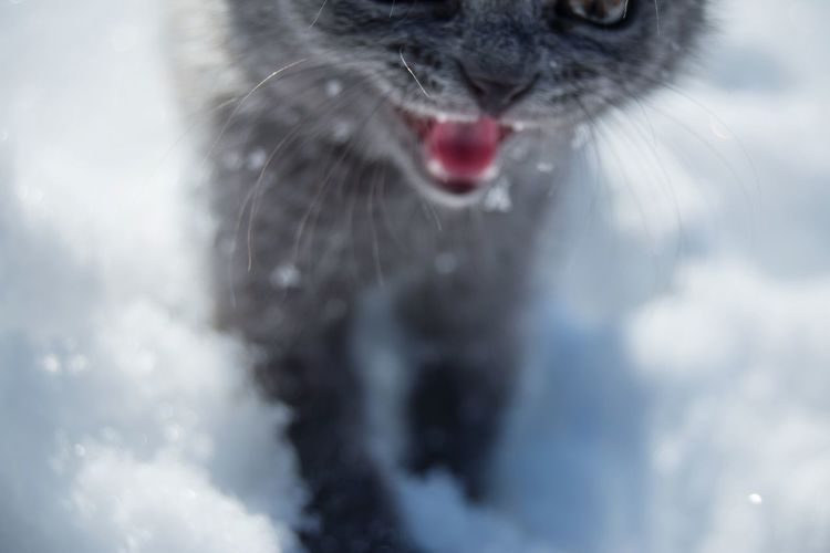 Grin From My Point Of View Snow Winter Cat High Angle View Animal Themes Animal Wildlife Pets Portrait Domestic Cat Red Close-up Animal Tongue Animal Nose Animal Eye Whisker Kitten Feline Animal Mouth Cat Animal Face Sticking Out Tongue Licking Snout Protruding