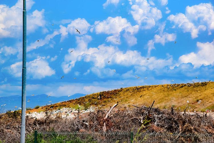 landfill with birds in croatia Landfill Birds Gull Rubbish Rubber Rubb Filth Land Landscape Pollution Pollution In My World Pollination Skx Clods Clody Skx Animal Animal Themesä K Killing Plastic