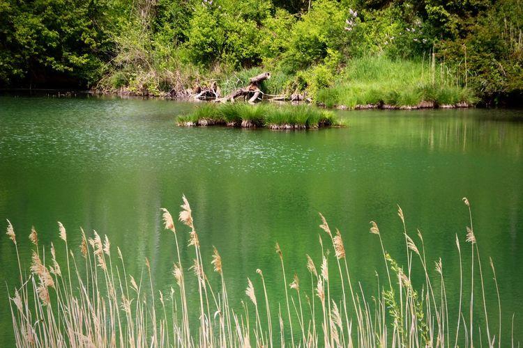 Plant Lake