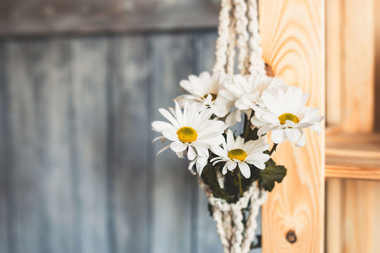 Bouquet of white daisy flowers in white knitted macrame pot. selective focus