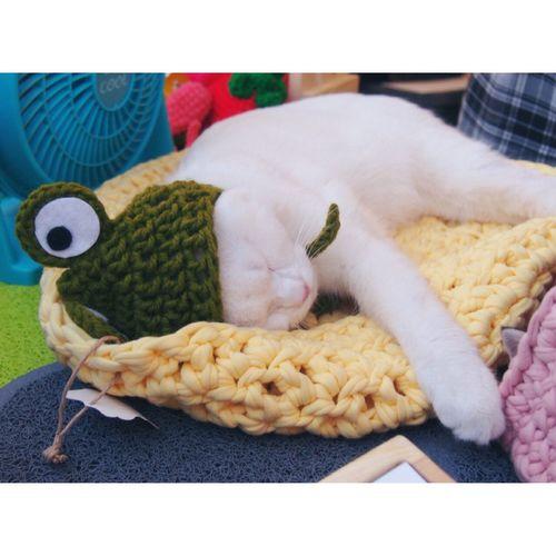 ねこ A cat in ...... Hello World Catoftheday Cat♡ Catsofinstagram Suvidos Taking Photos Cheese! Hello World Cat Lovers Art Yourself