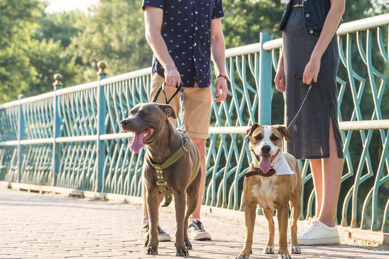 Low section of friends with dogs standing on bridge
