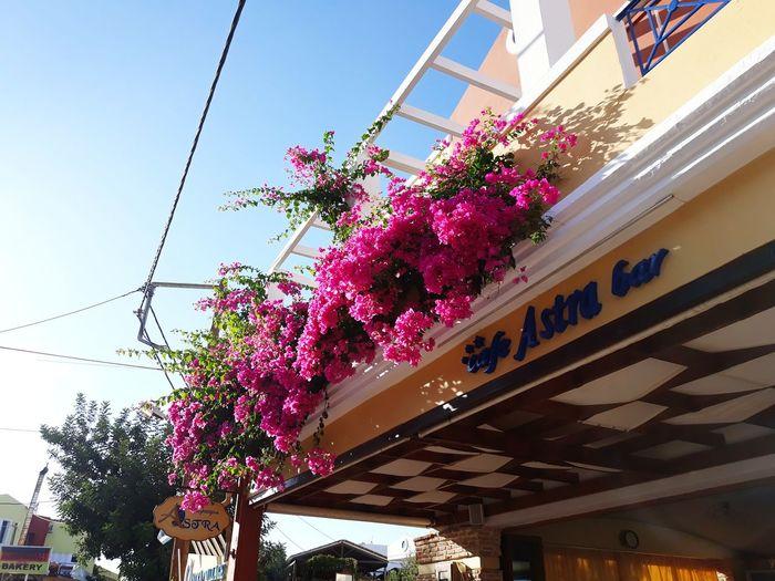 Greece Greece Trip Crete Greece Crete Island Chersonissos Flower City Tree Architecture Sky