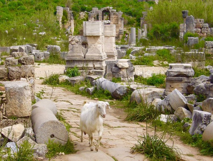 Goat in Ruins Goat Perge Architecture Animal Animal Themes Solid Built Structure Mammal The Past History Plant Stone Material No People Nature Day Sculpture Ancient Old Ruin Spirituality