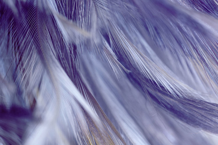 Full frame shot of feathers