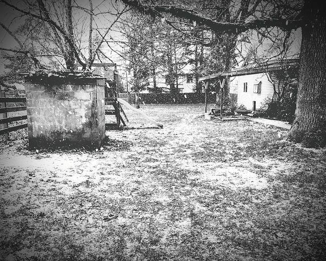 Snowing Snow ❄ Outdoors White Day Slide Black & White Backyard Tree peaceful