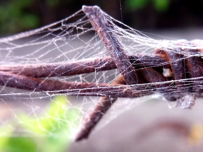 EyeEm Selects Day Complexity Web Spider Web Backgrounds Spider Close-up Intricacy