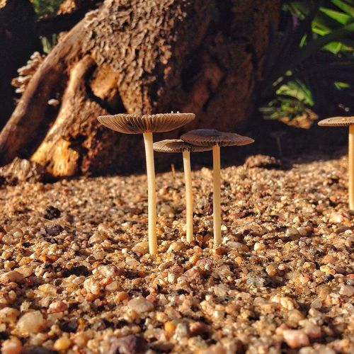 Honguitos 🍄 Fungi Hongos