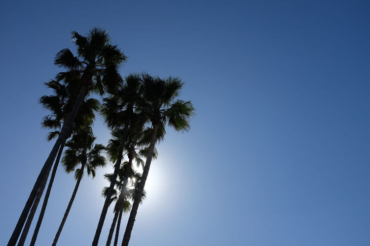 Palm Tree Beauty In Nature Blue Clear Sky Day Low Angle View Nature No People Outdoors Palm Tree Sky Tree Tree Trunk