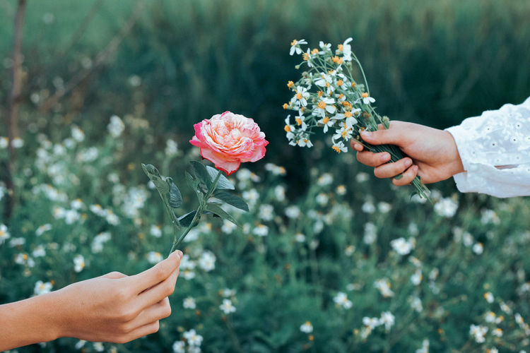 Close-up of hand holding flowers against blurred background