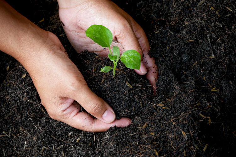 Human Hand Hand Human Body Part Plant Plant Part Leaf Growth Holding Gardening Nature Planting One Person Unrecognizable Person Agriculture Dirt Lifestyles Finger Beginnings Human Finger Care Outdoors Sapling