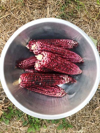 Corn #corn Food