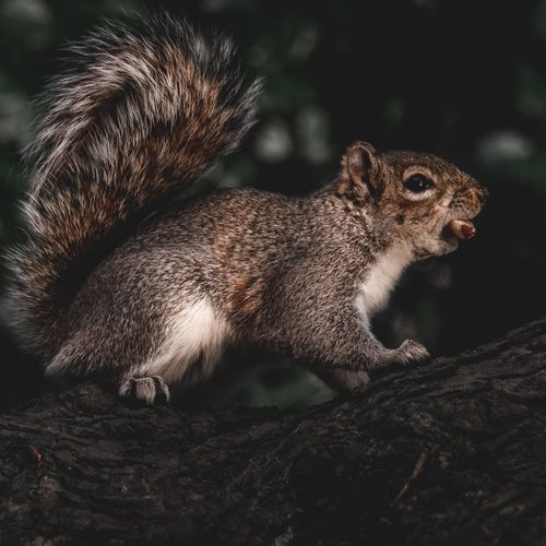 Mammal Fluffy Outdoors Adorable Wildlife & Nature Park Nut Nuts Animal Wildlife Animal Themes Animal One Animal Animals In The Wild Rodent Mammal Vertebrate Close-up No People Squirrel Nature Tree Focus On Foreground Day Animal Body Part Side View Outdoors