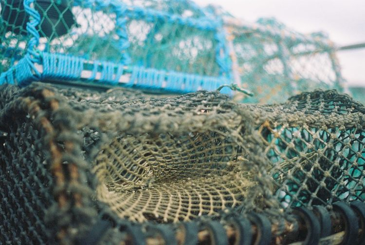 Animal Themes Cage Close-up Commercial Fishing Net Conwy Conwy Harbour Day Fishing Fishing Net Fishing Tackle Lobster Lobster Pots Lobsters Nature No People Outdoors